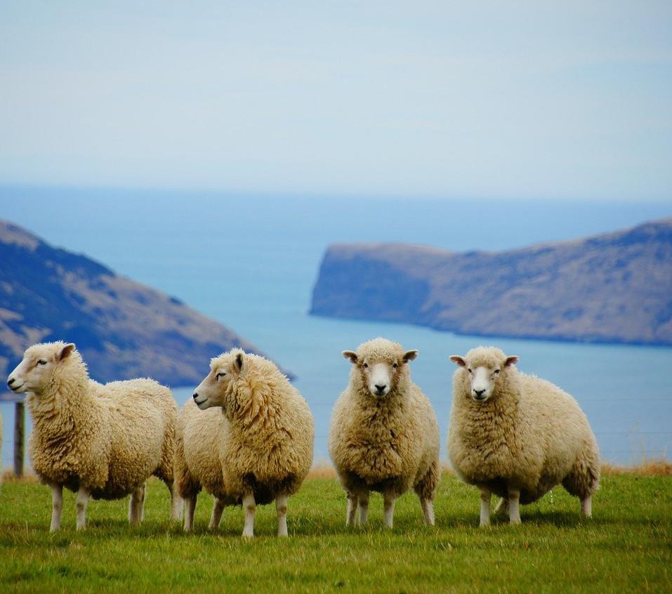 compte les mouton pour dormir